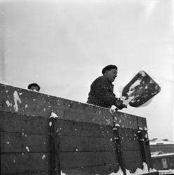 Mann med spade med snø på lastebil, Oslo, 28.11.1956.