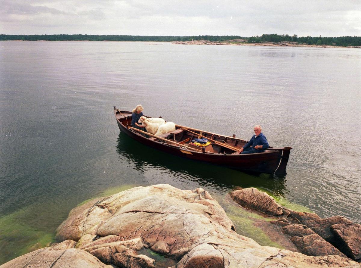 Bondefiskaren Oscar Andersson och Ditte Werner transporterar Roslagsfår mellan Söderboda fiskehamn och Storbådan, en ö utanför Gräsö där de går på sommarbete, Gräsö socken, Uppland 1995
