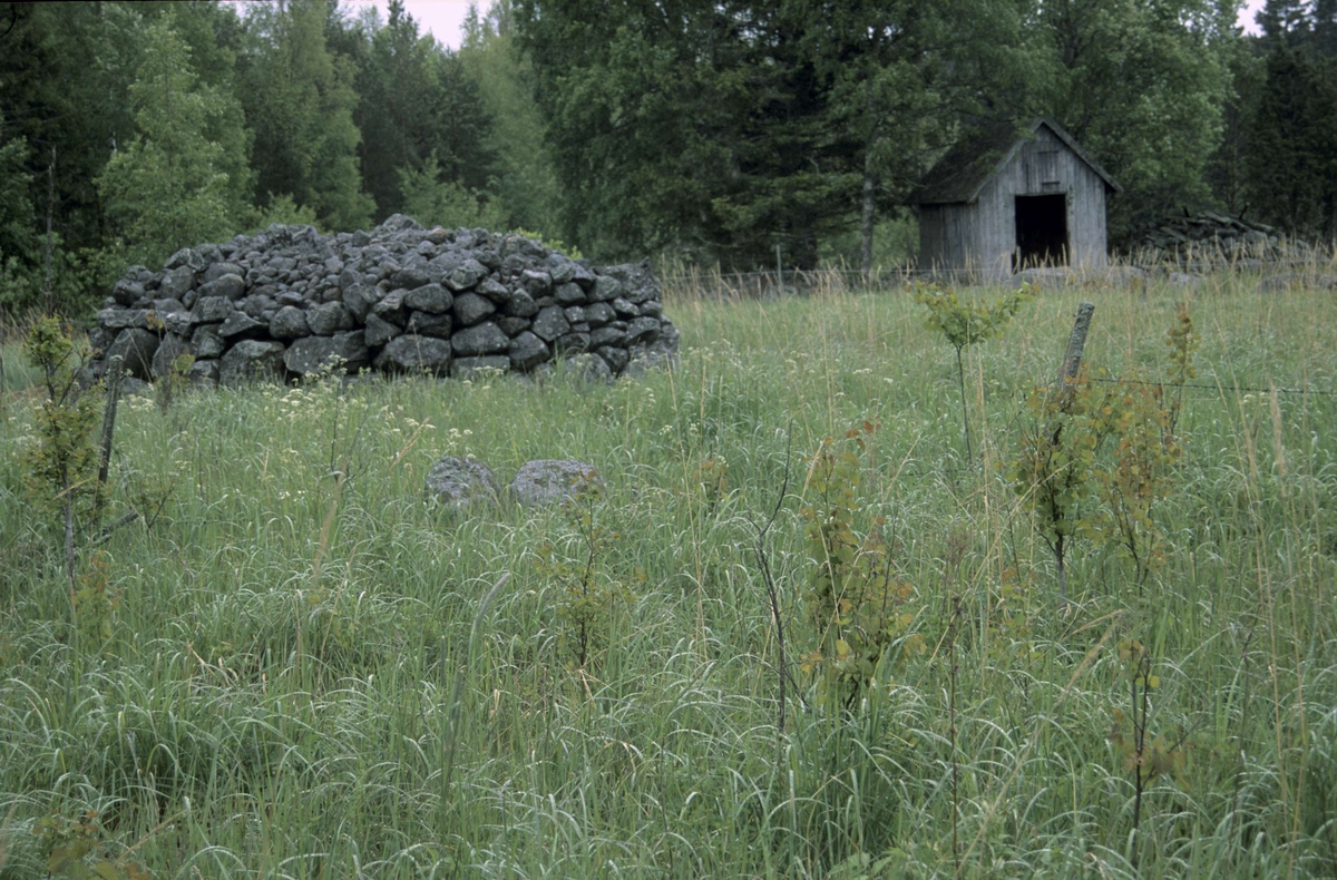 Stenröse, Hållen, Hållnäs socken, Uppland 2000