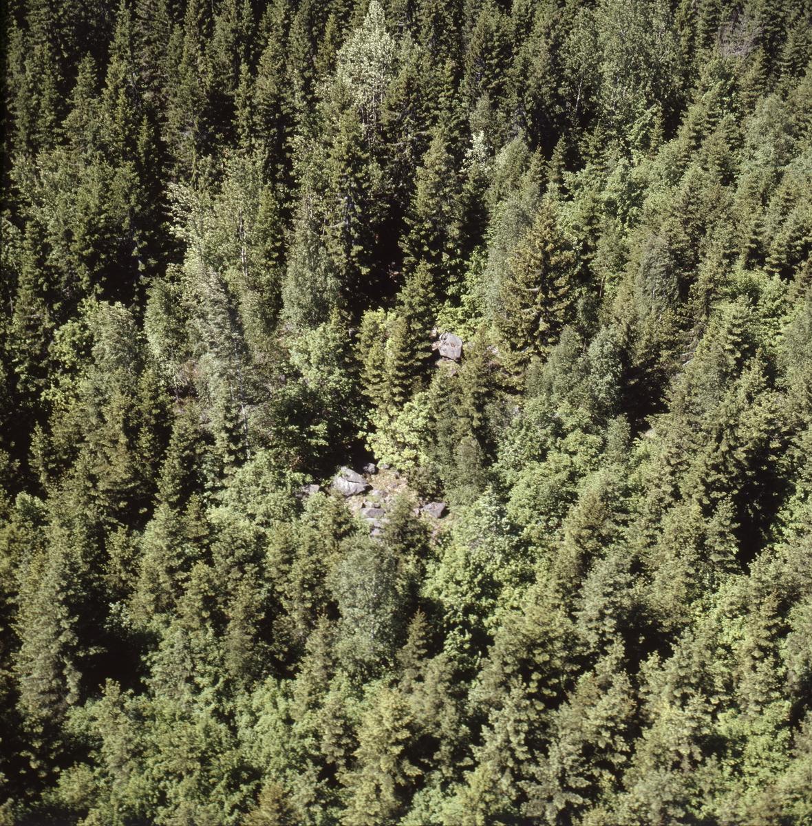 Vy över skogarna vid sjön Vällen, Bladåkers socken, Uppland, juni 1989