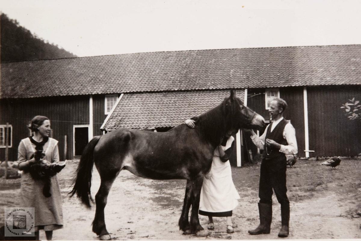 En hest, bindeledd mellom prest og tjenerskap. Knud Tjomsland var prest i Bjelland Prestegjeld.