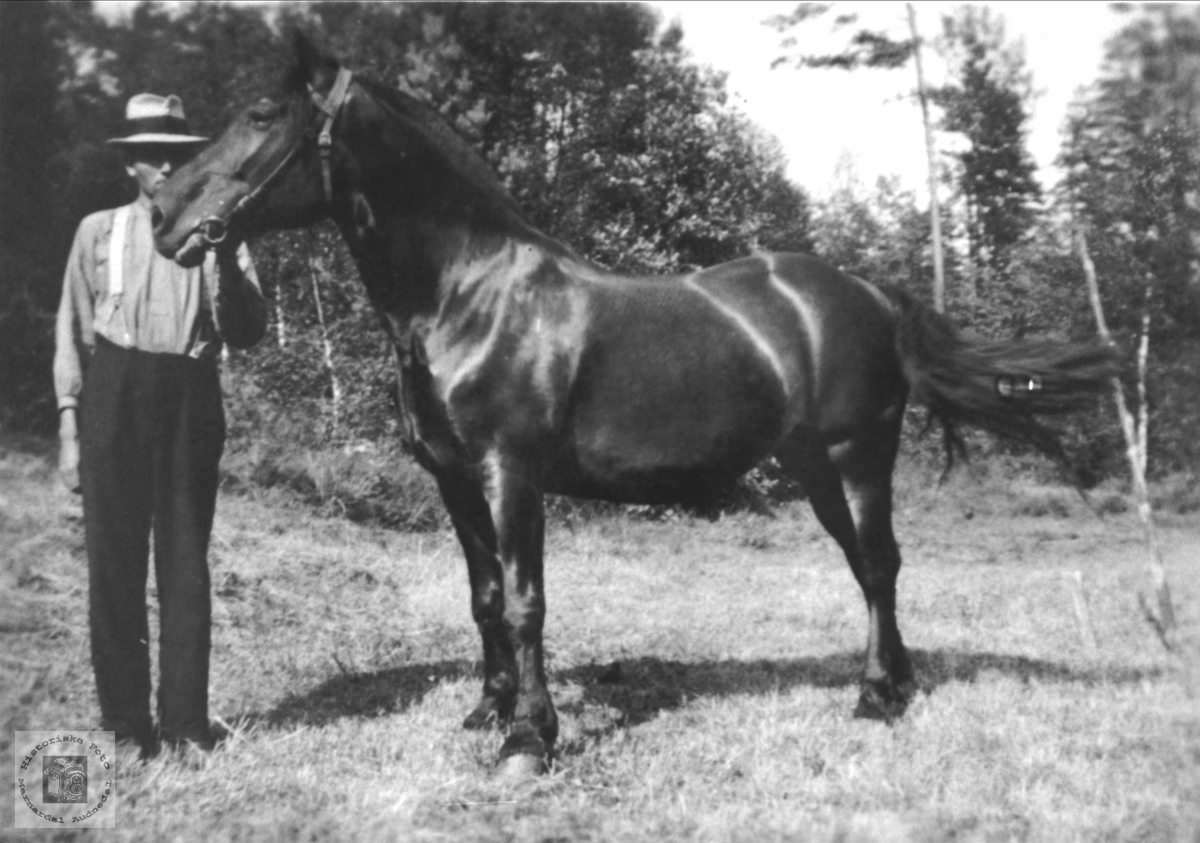 Bonde, Knut Finsdal med hest, Øyslebø.