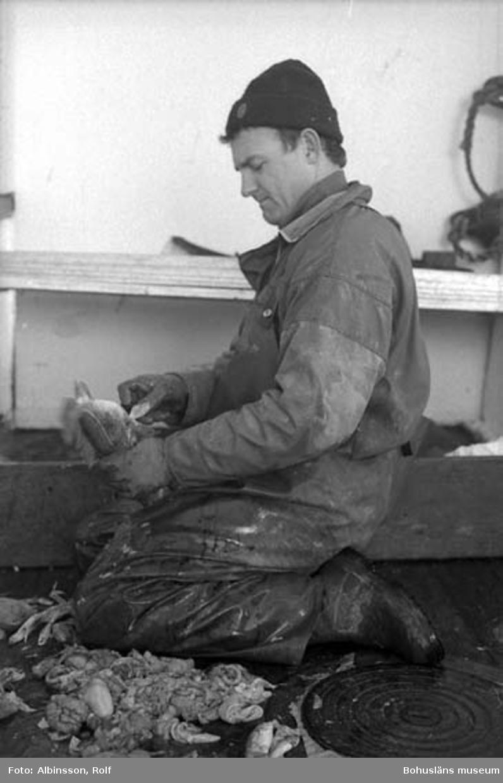 """""""Harald Hansson rensar fisken medan Bengt Persson kokar räken"""" enligt fotografens notering."""