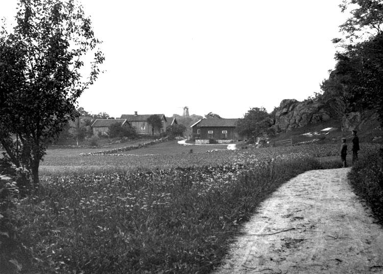Sommarbild från Toröd 1924