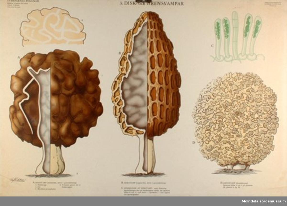 :1: Skivsvampar.:2: Rör- och taggsvampar.:3: Disk- och grensvampar.:4: Gren-, buk- och tryffelsvampar.