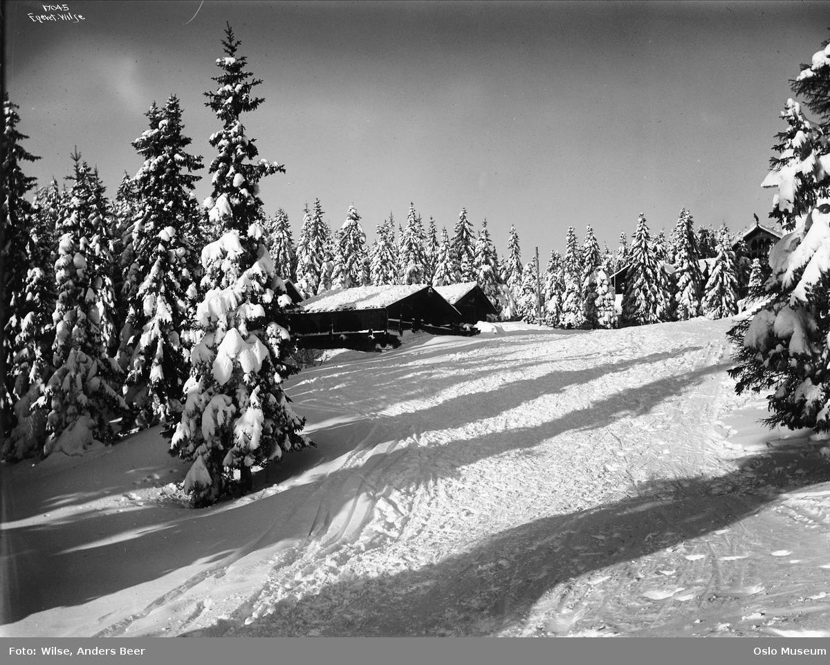 granskog, snø, Frognerseteren, skog, vinterstemning, skiløyper