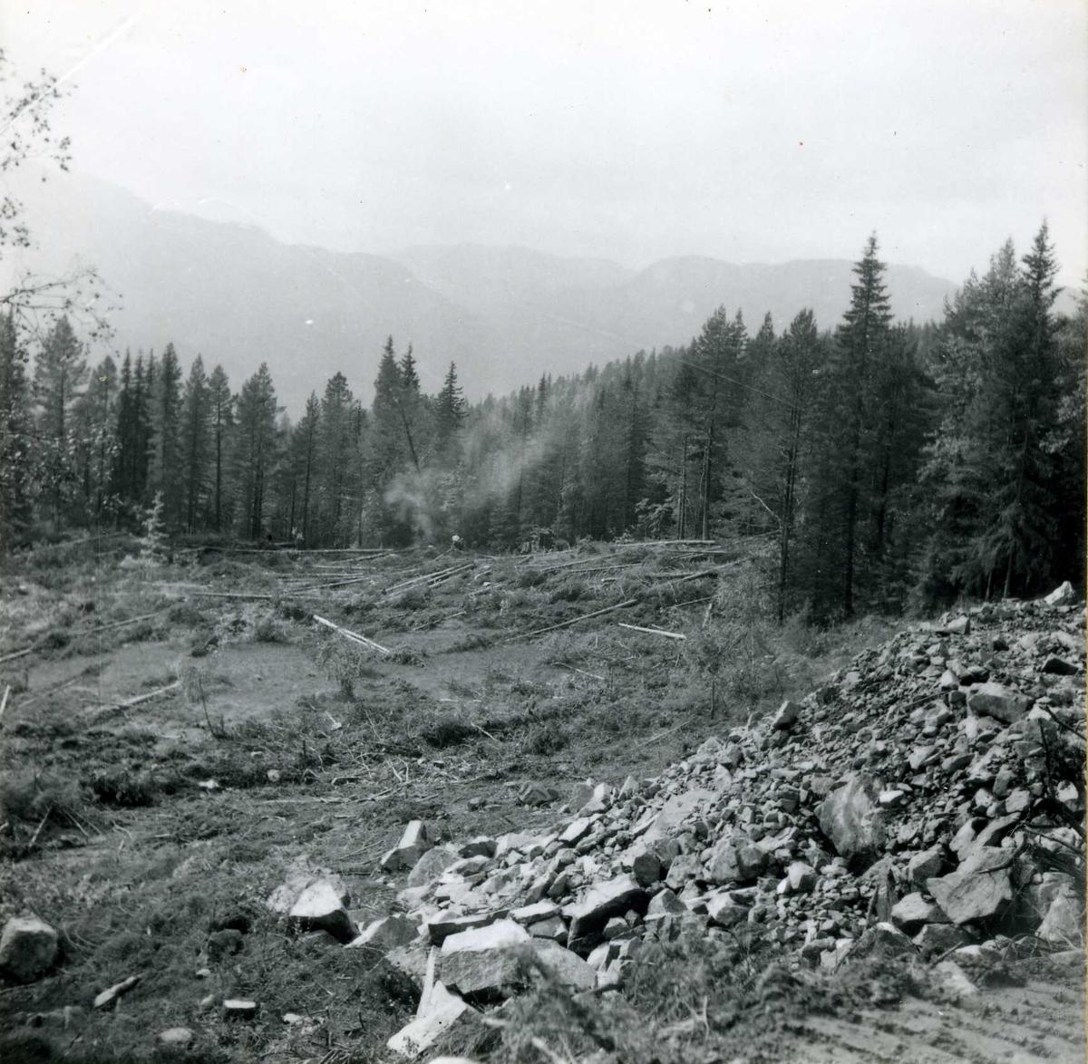 Tilløpstunnel frå Vesås. Rydding av skog.