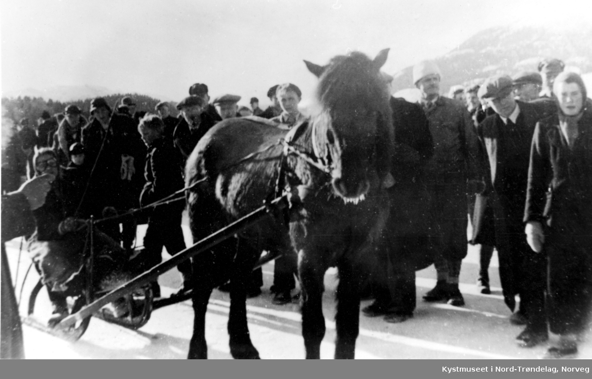 Kappkjøring på Horvereidvatnet med kusk Jorid Wassås og hesten Trond