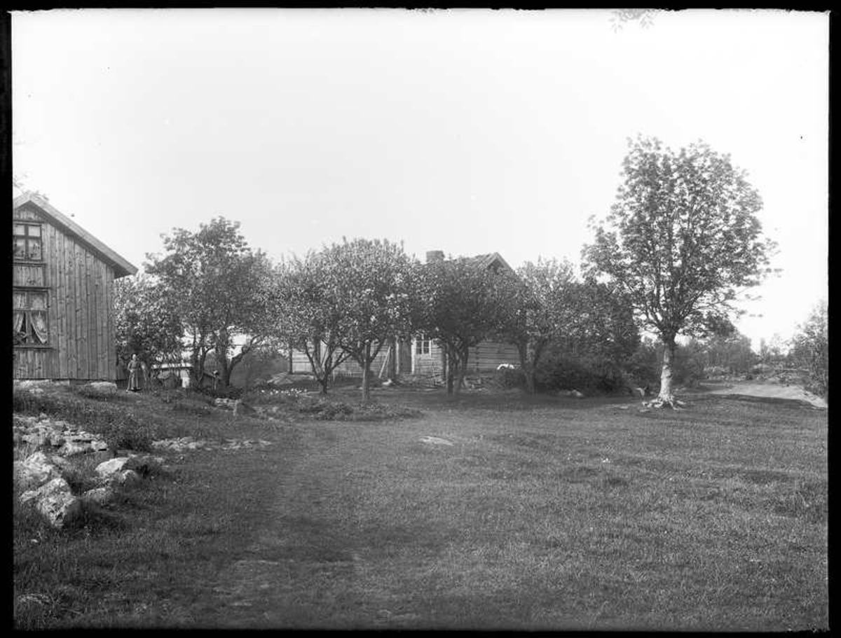 Det nya och gamla bostadshuset på Arnstorp och trädgården, där aplarna blommar. Vid nya boningshuset står Britta Berntsdotter, Hjärtum 1843-07-12,