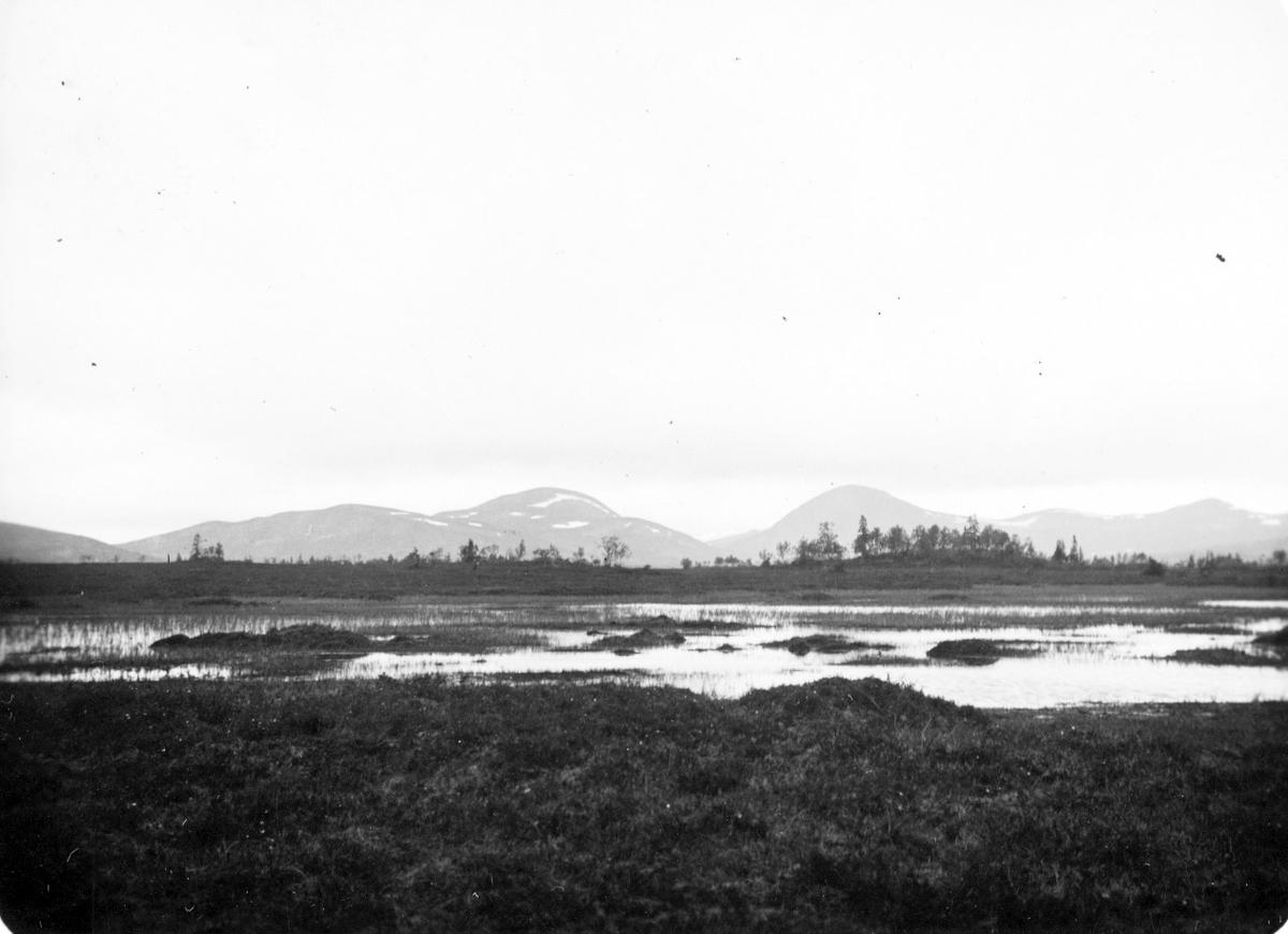 Biotop för Sädgås (Anser fabalis) Parti av Oldflon. 30 Juni 1931.