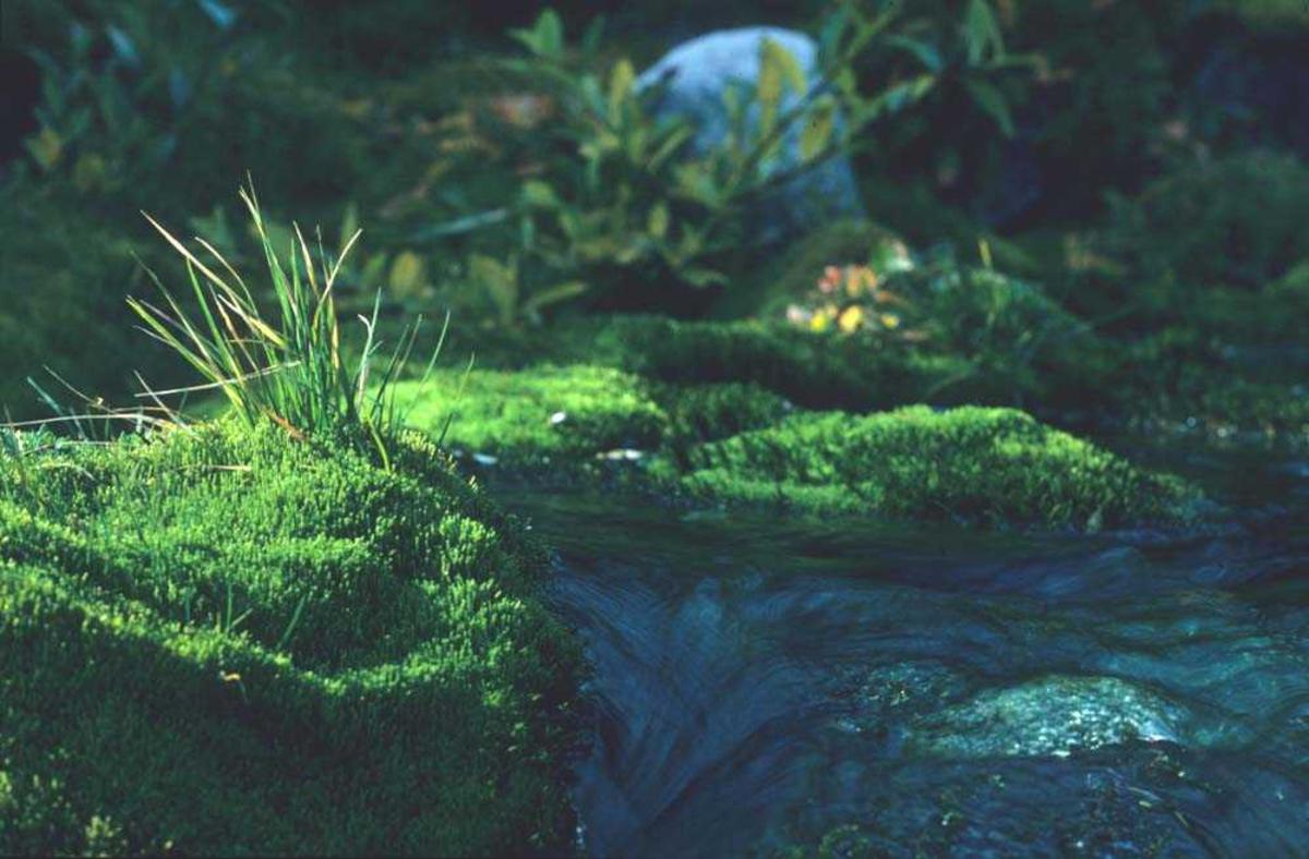 Landskap. Våridyll. Grønt parti langs en stille bekk. Ett sted i Norge.