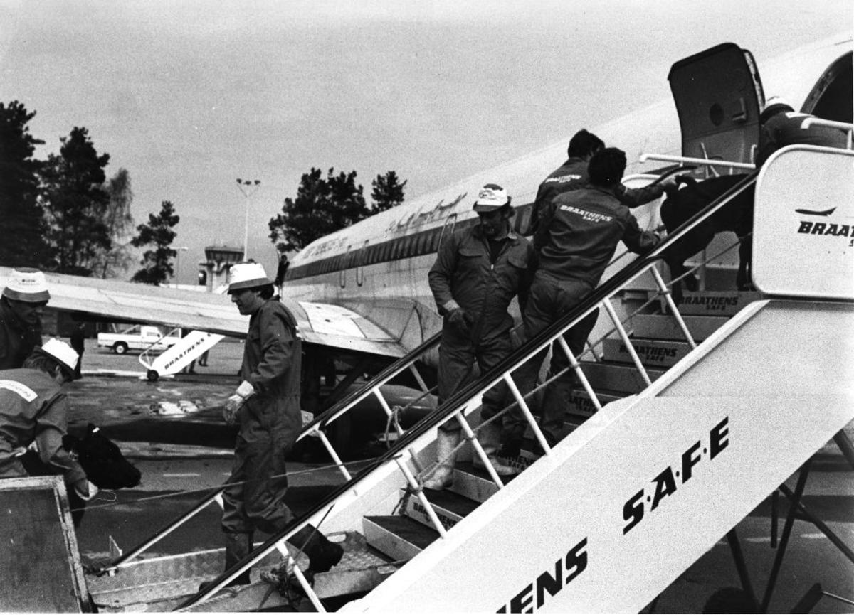 Lufthavn/Flyplass. Værnes. Et fly fra ZAS Airline of Egypt, WW- 515. Dyretransport/kalvetransport til Portugal og dyrene går selv ombord i flyet, med litt hjelp fra bakkemannskapet.