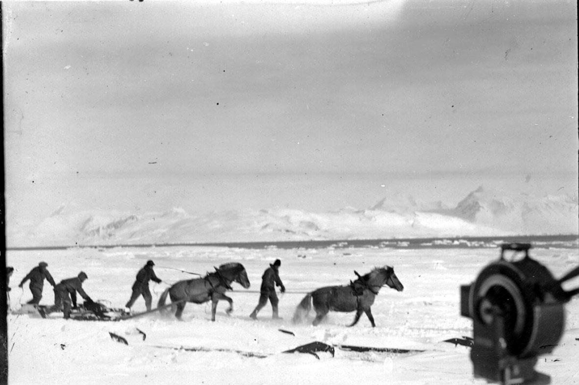5 personer i arbeid med 2 hester og slede. Hav og fjell i bakgrunnen. Snø på bakken.