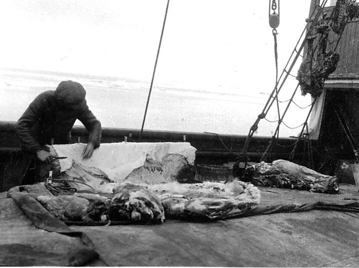 1 person parterer en isbjørn ombord i et fartøy. (Bjørn spekkes).