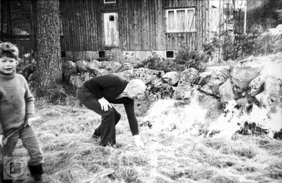 Hus og steingjerde som er borte nå, men furua står.