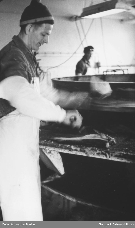 Fra Njords filetfabrikk i Øksfjord, 1953. Nærmest kamera Arne Arntzen ved skjæretrommelen