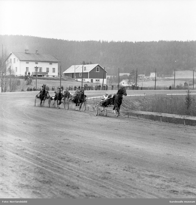 Seger & Gösta Nordin vann Bergsåkers Stora Heatlopp i två raka heat 1955. Storfavorit i loppet var Sören Nordins 10-åriga stjärnsto Frances Bulwark som startade 60 meter bakom vinnaren men fick nöja sig med en andra respektive fjärde plats i de två heaten.