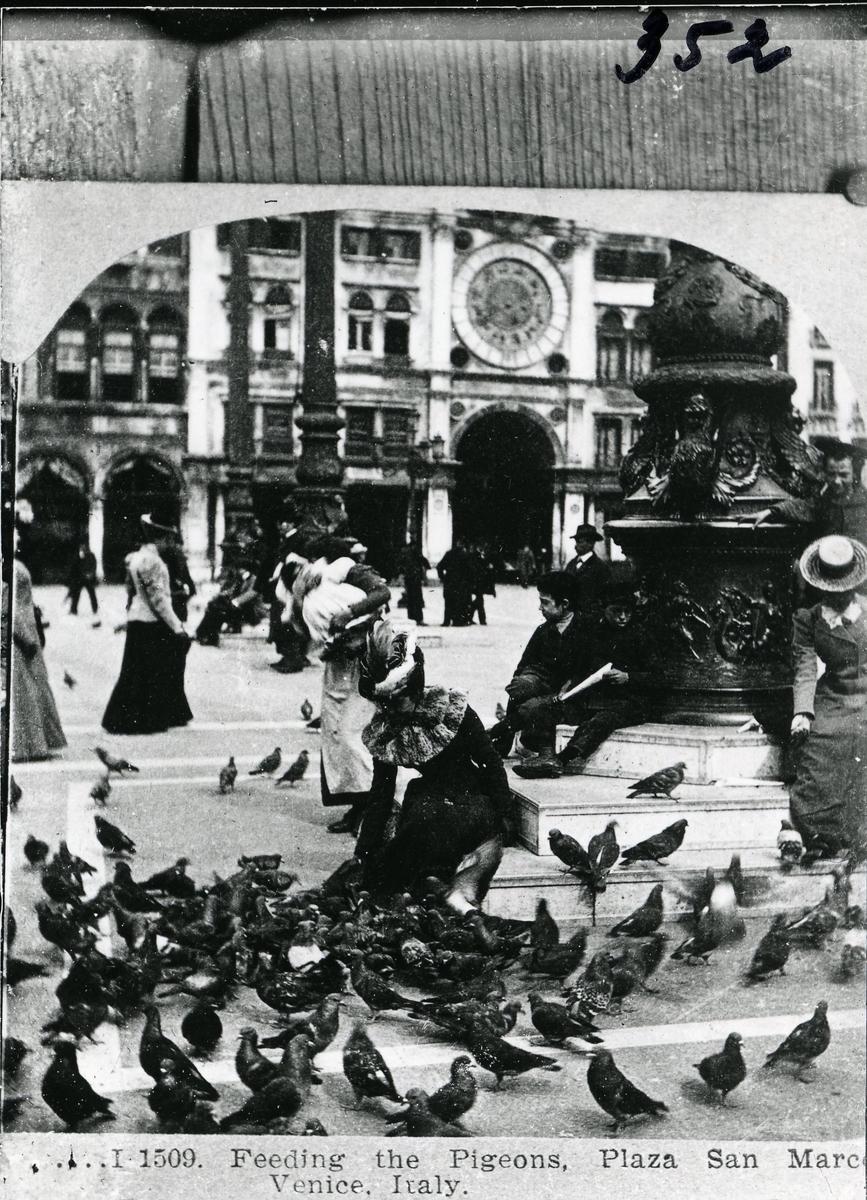 Mating av duer på plaza San Marcos Venecia