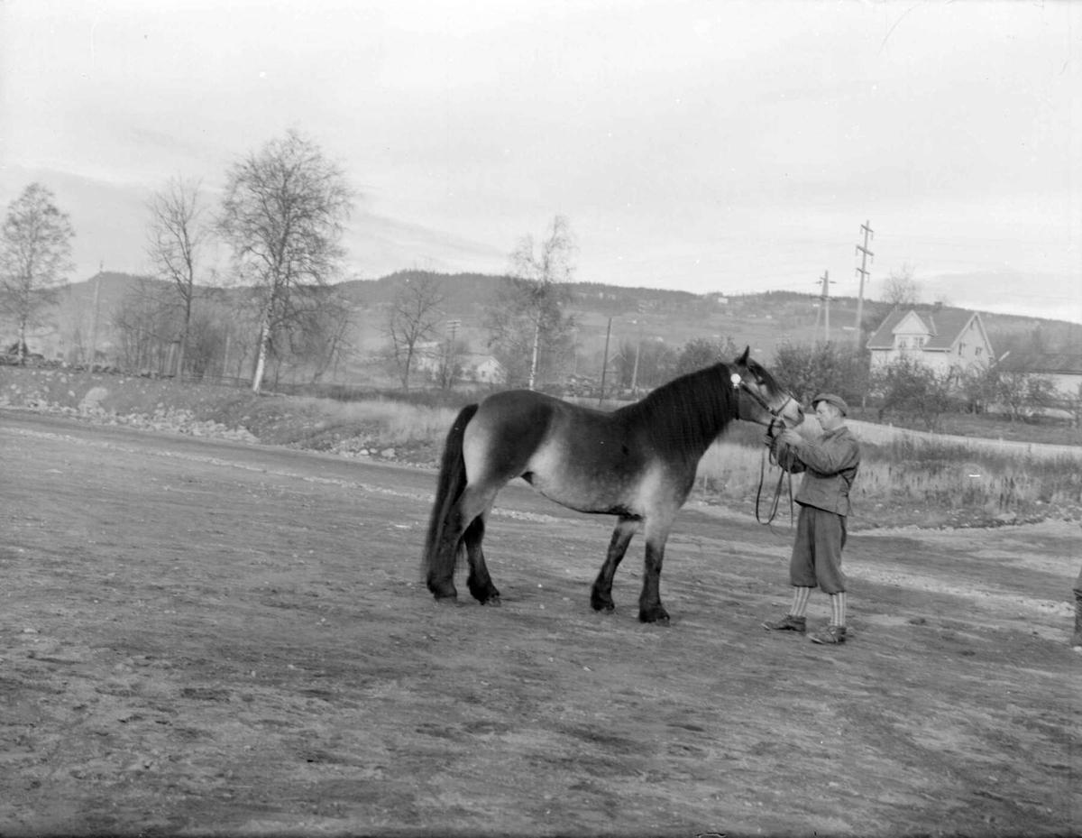 Hest. Hoppeutstilling 1958 på Stampesletta.