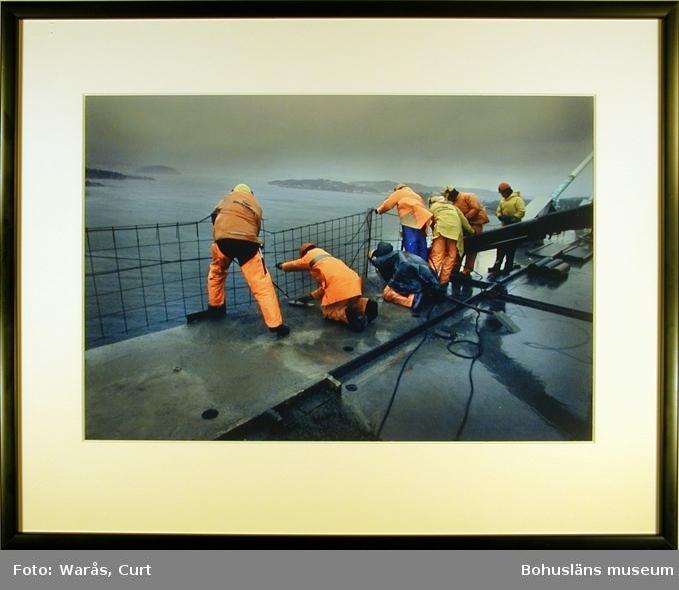 Tufft jobb. Skanskas arbetare göt ihop sista delen av Uddevallabron i isande storm den 17 december 1999