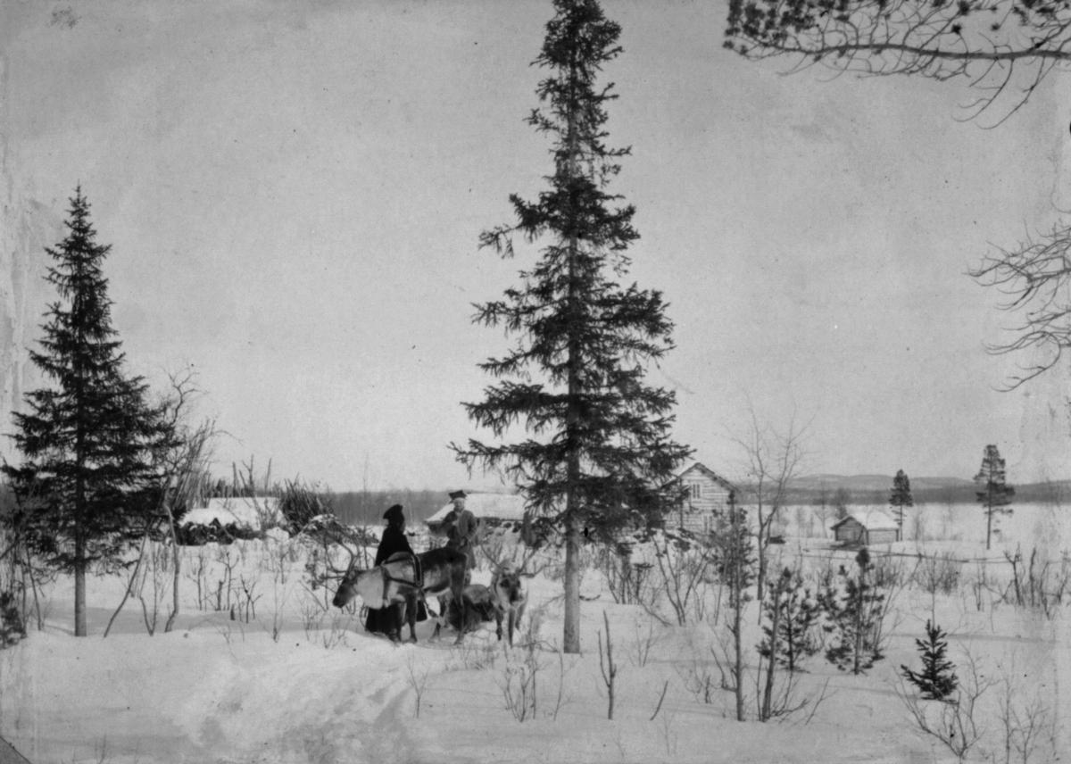 Politimester Ulve og vappus Ole Nilsen Noste under det fotografen har kalt 'verdens nordligste grantrær'