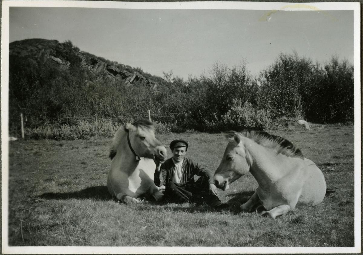 """Alf Larsen (sønn av Sara og Lars A. Larsen) sitter mellom to hester på skiferbruddet i Friarfjord. Han er kledd i lue, skjorte, jakke, bukse og sko. Hesten t.v. har en bjelle rundt halsen. I bakgrunnen kan man se busker og er gjerde. Fjordhestenes eiere var Lars A. Larsens og den andre"""" Blakken"""", tilhørte Skiferbruddet ved Ingmar Reeberg."""