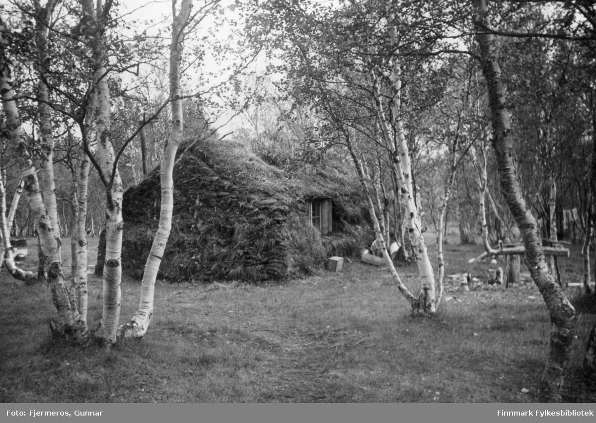 En hytte i skogen. Hytta er dekket av gress/mose eller torv, antagelig for isolasjon. Bildet er tatt sommeren 1947 og stedet er ukjent.