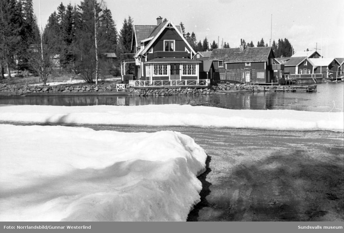 Vårreportage från Spikarna, Alnö. En man och en liten pojke tjärar båten inför sjösättningen.