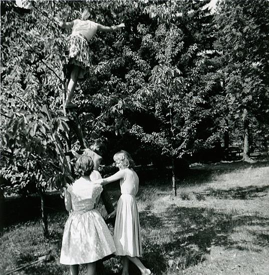 Britta Molin i vårt härliga körsbärsträd - små men söta bär. Karin och Ann håller stege. Veronika på väg upp. Trädet borta sedan många år - jag sörjer det.