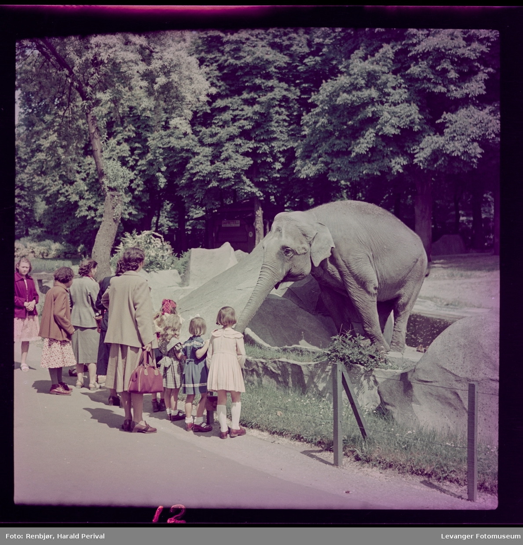 Fra dyrehagen,  zoo i Paris