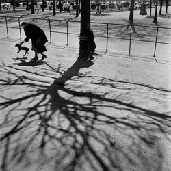 Paris. Kvinna med hund, skuggor från ett träd.