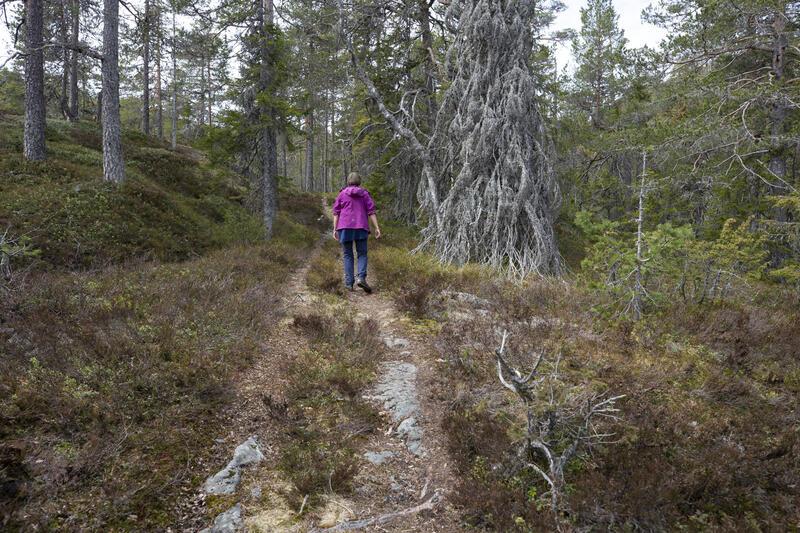 Fra Henschensetra fører stien langs den gamle kjerreveien opp bakken gjennom gammel skog til gruvene (130 m stigning). Turstien på den gamle gruveveien går videre mot Helgevannsgruvene. (Foto/Photo)