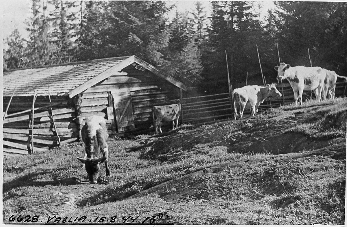 Fra sommerfjøset i Vasslia, 1944.