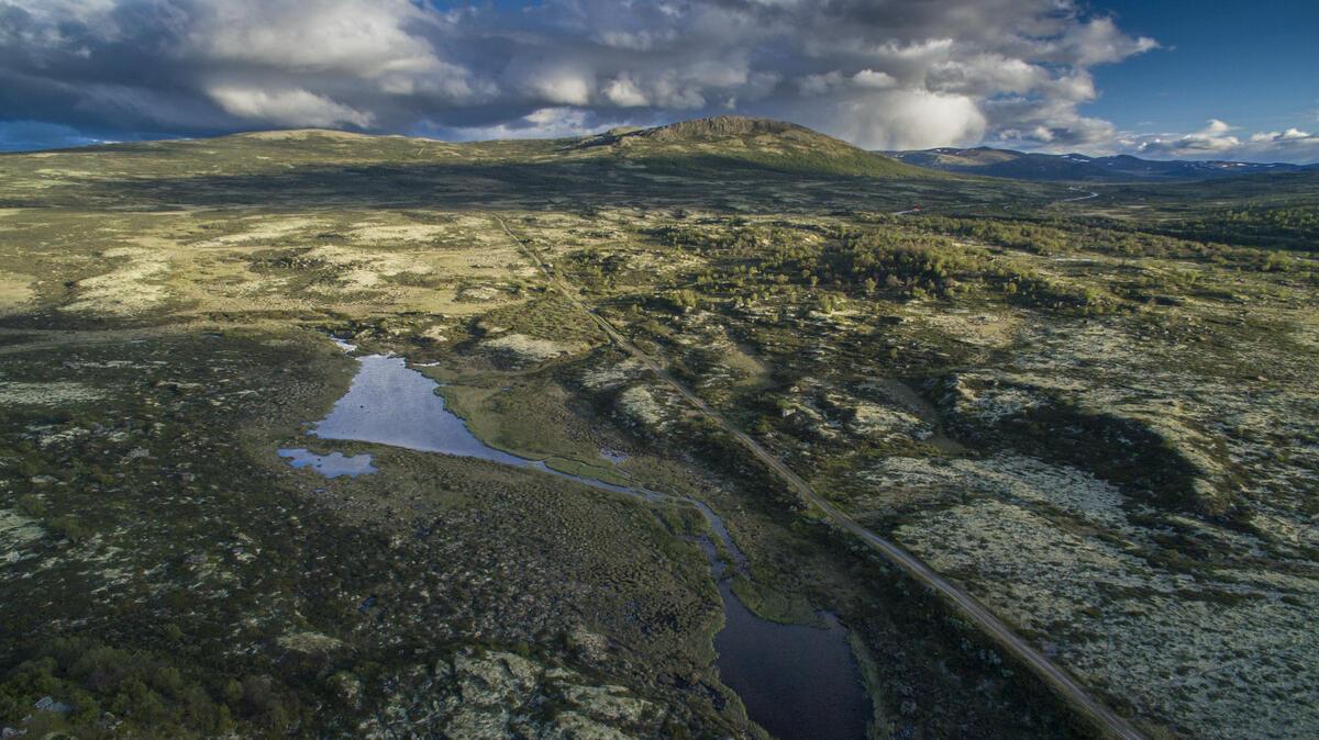 Kongevegen over Dovrefjell. Foto: Matti Bernitz (Foto/Photo)