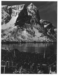 Reine i Lofoten