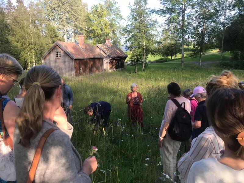 Lina Dybdal fra Ditlevines utsikt finner spiselige ville vekster i Stenbergparken. Foto: Toten historielag (Foto/Photo)