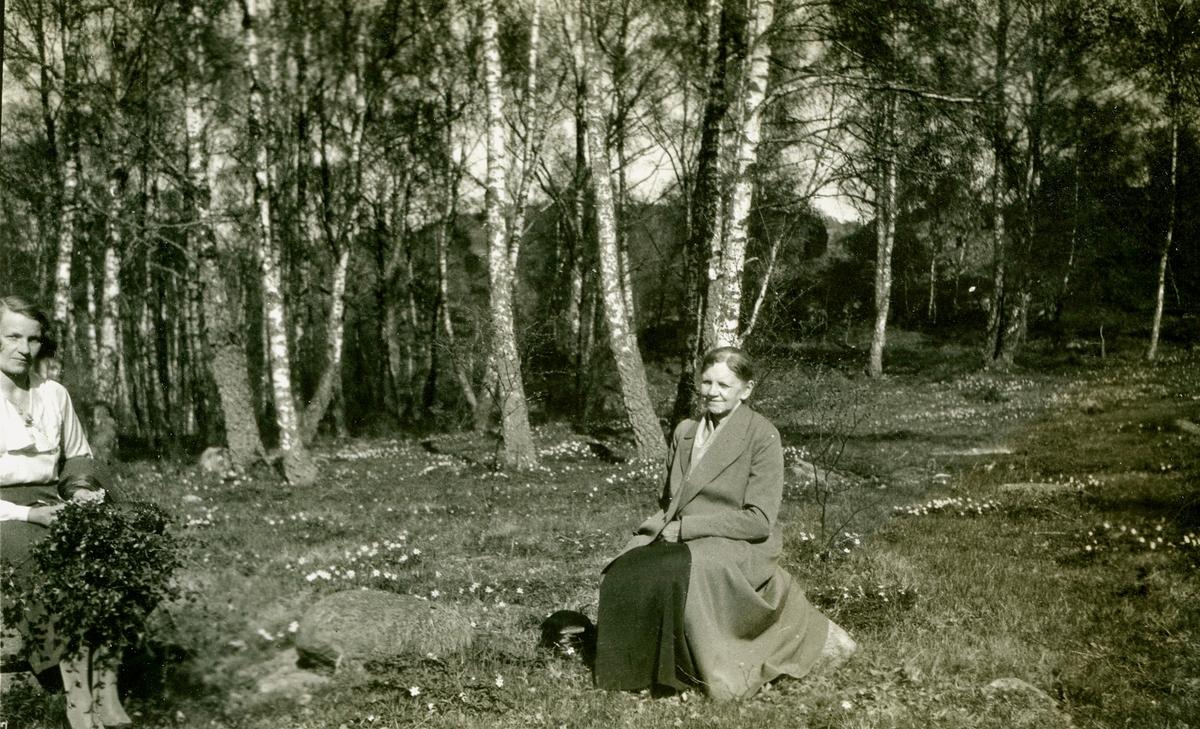 """Vitsippor på tomten tillhörande Kållered Stom """"Nygård"""" (revs 1970) som låg utefter järnvägen och Gamla Riksvägen, okänt årtal. Från vänster skymtar Ingeborg Gustavsson (1901 - 1987, gift Johansson) och modern Karolina Gustavsson (1873 - 1949)."""