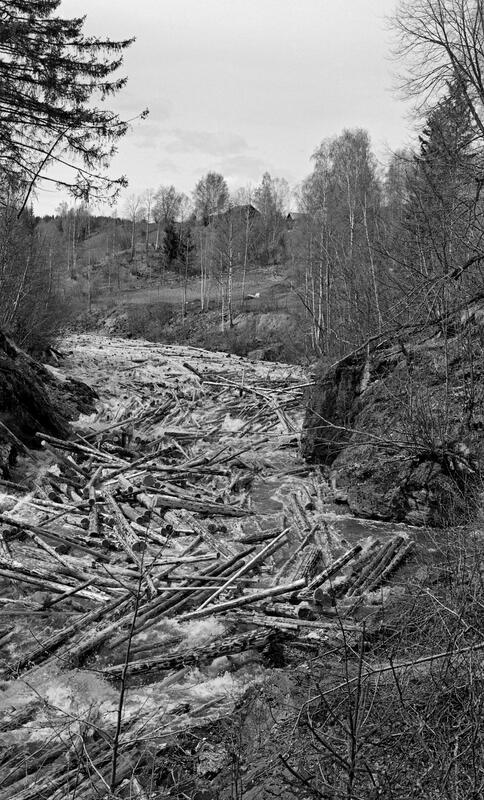 Foto av tømmer som har hektet seg sammen til en vase. (Foto/Photo)