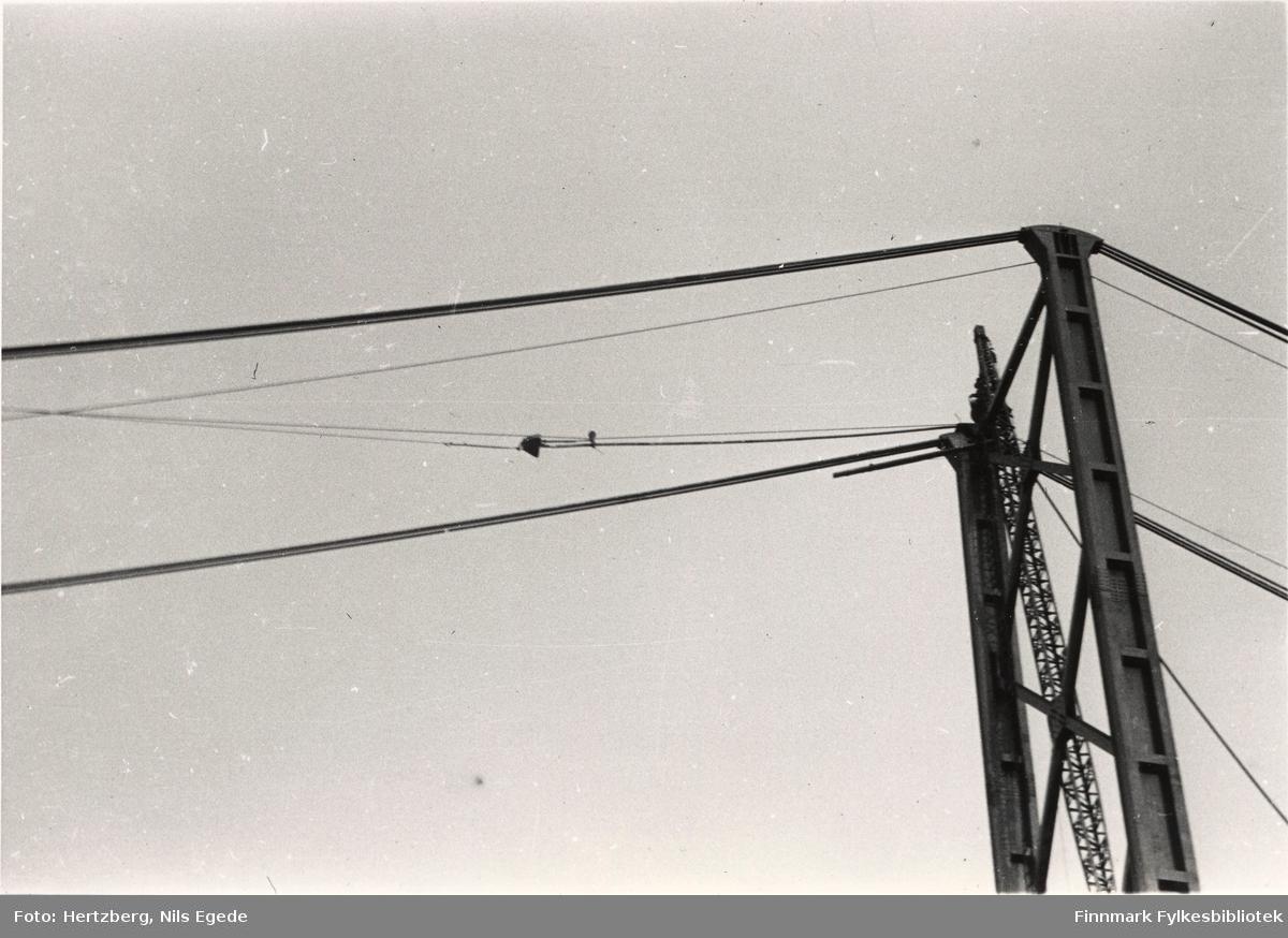 Arbeidet foregår på Tana bru, 1947. Strekking av kabler. Kabelen er kommet over første tårntopp. Se også bildene 280-312.
