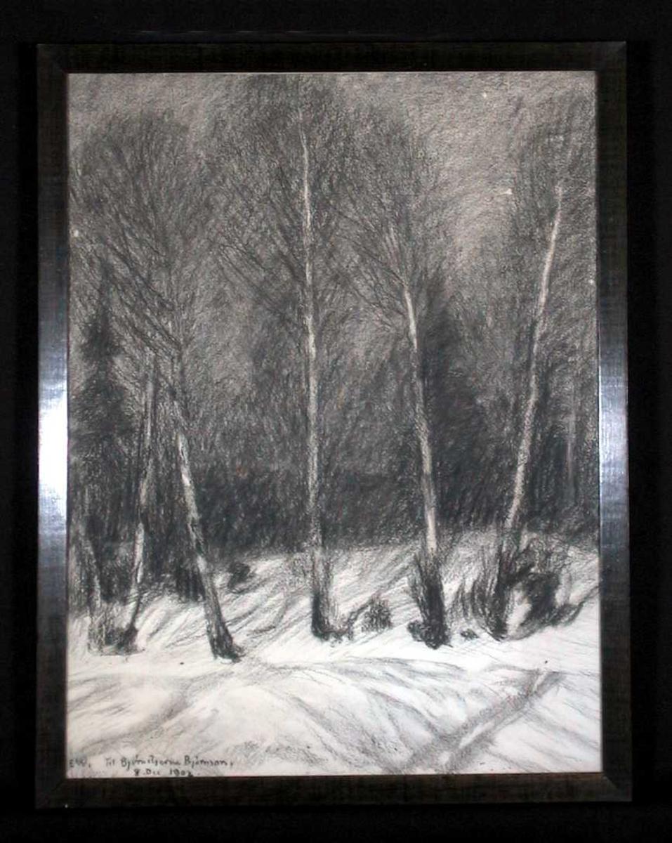 En klynge nakne bjørketrær i en snødekt skråning