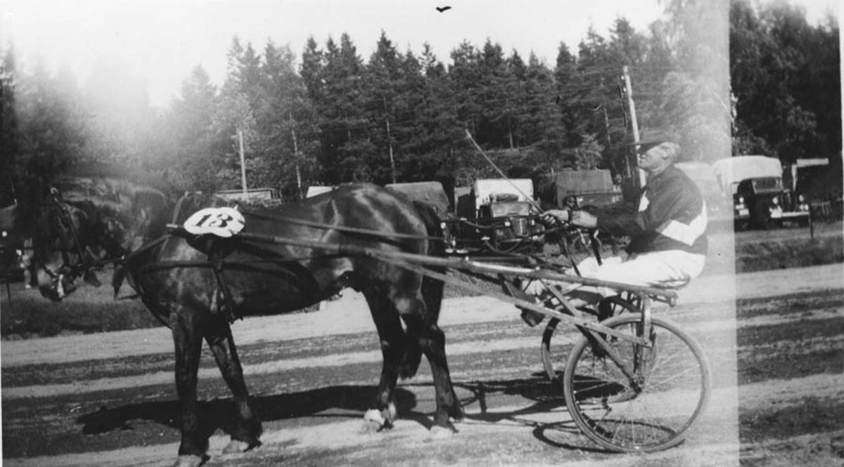 Fra travkjøring, hest med sulky og kjører.
