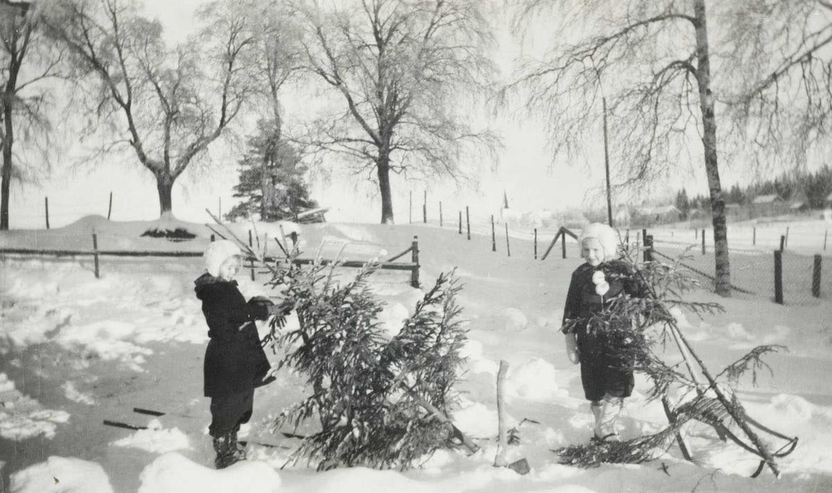 To jenter henter juletre i 1949