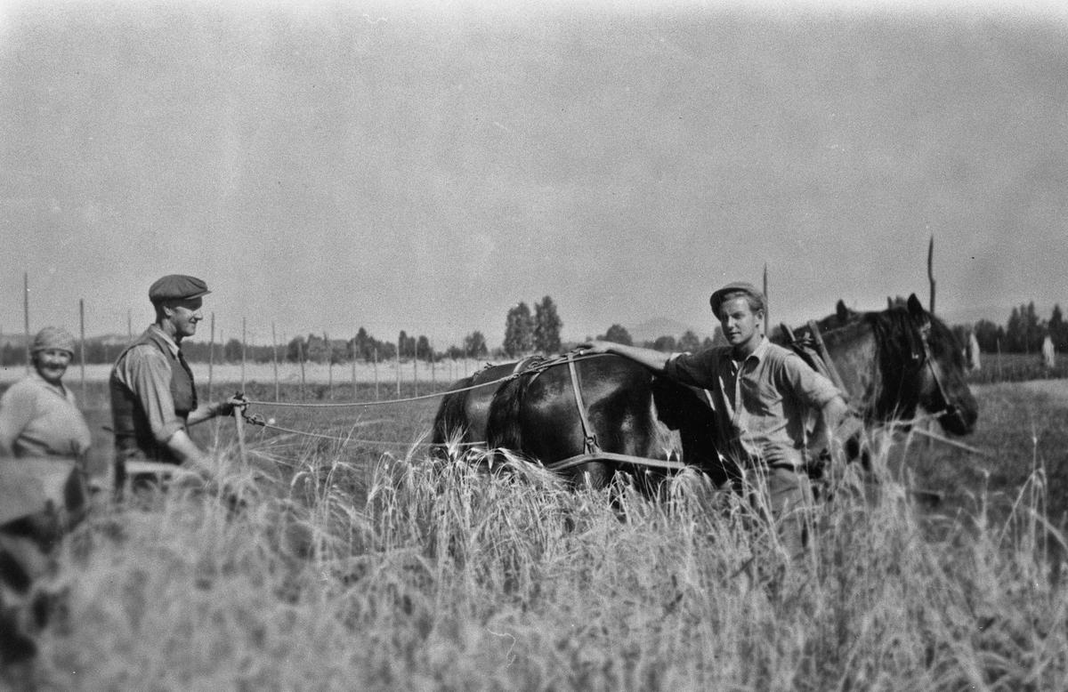 Arbeid på jordet med hester.