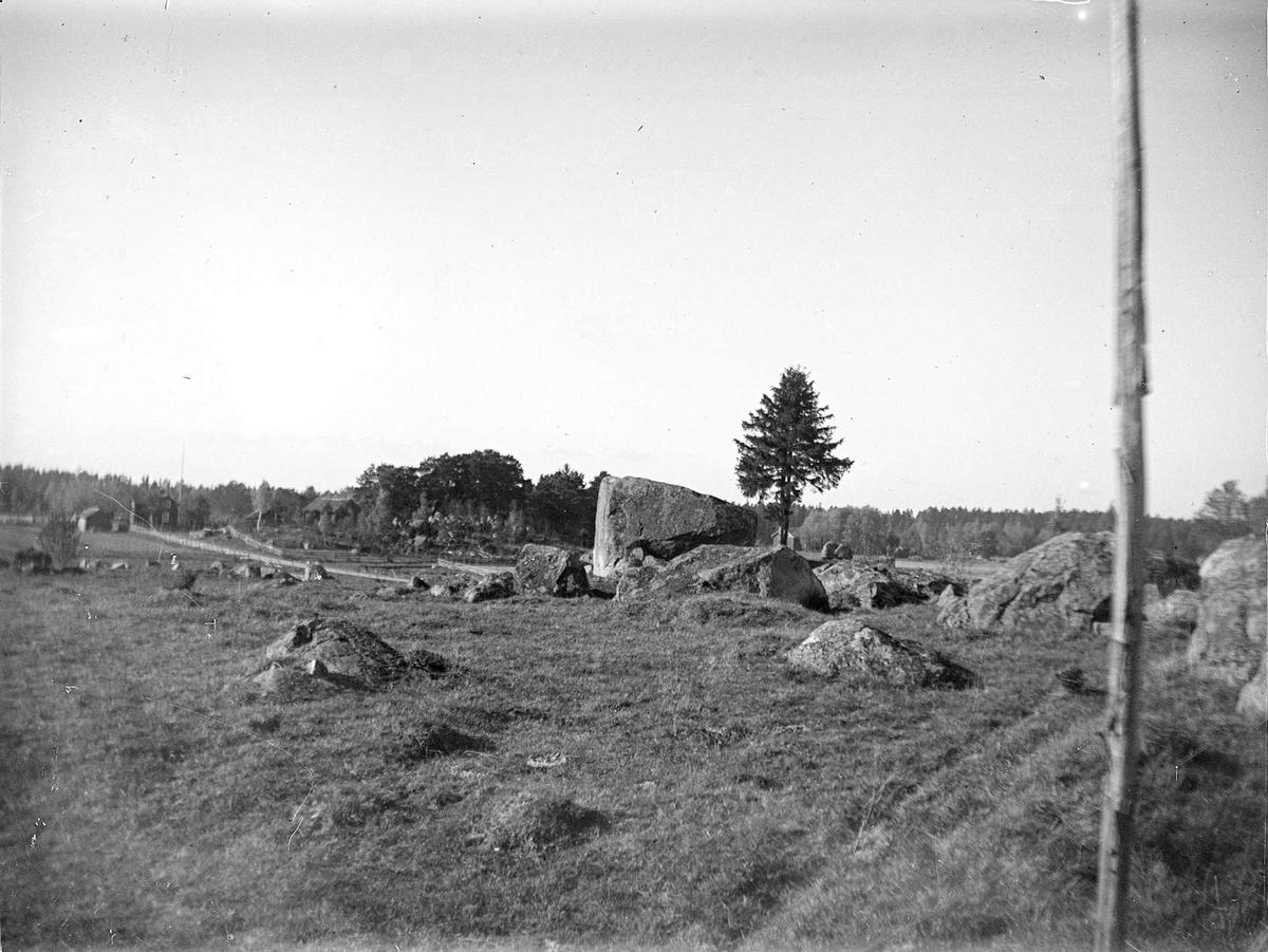 Betesmark med flyttblock i Nässelsta, Vittinge socken, Uppland i oktober 1921
