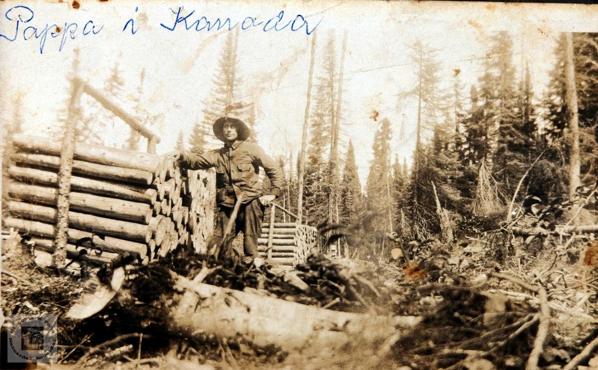 Johan Helle på tømmerhogst i Canada.
