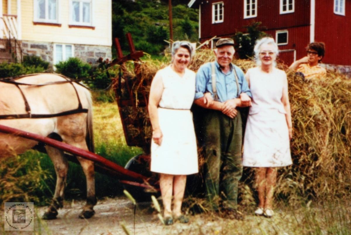 Nils Øydna med turister i høyonna. Audnedal.