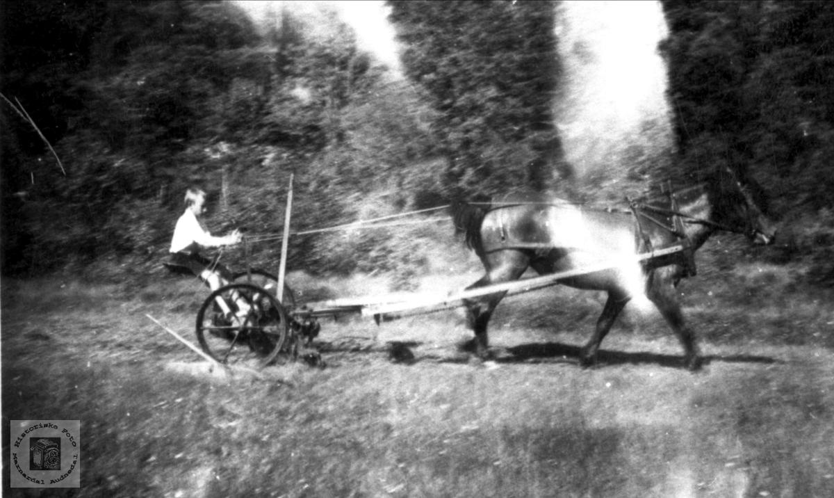 Hesteslåmaskin i bruk på Vollan, Høye Øyslebø.