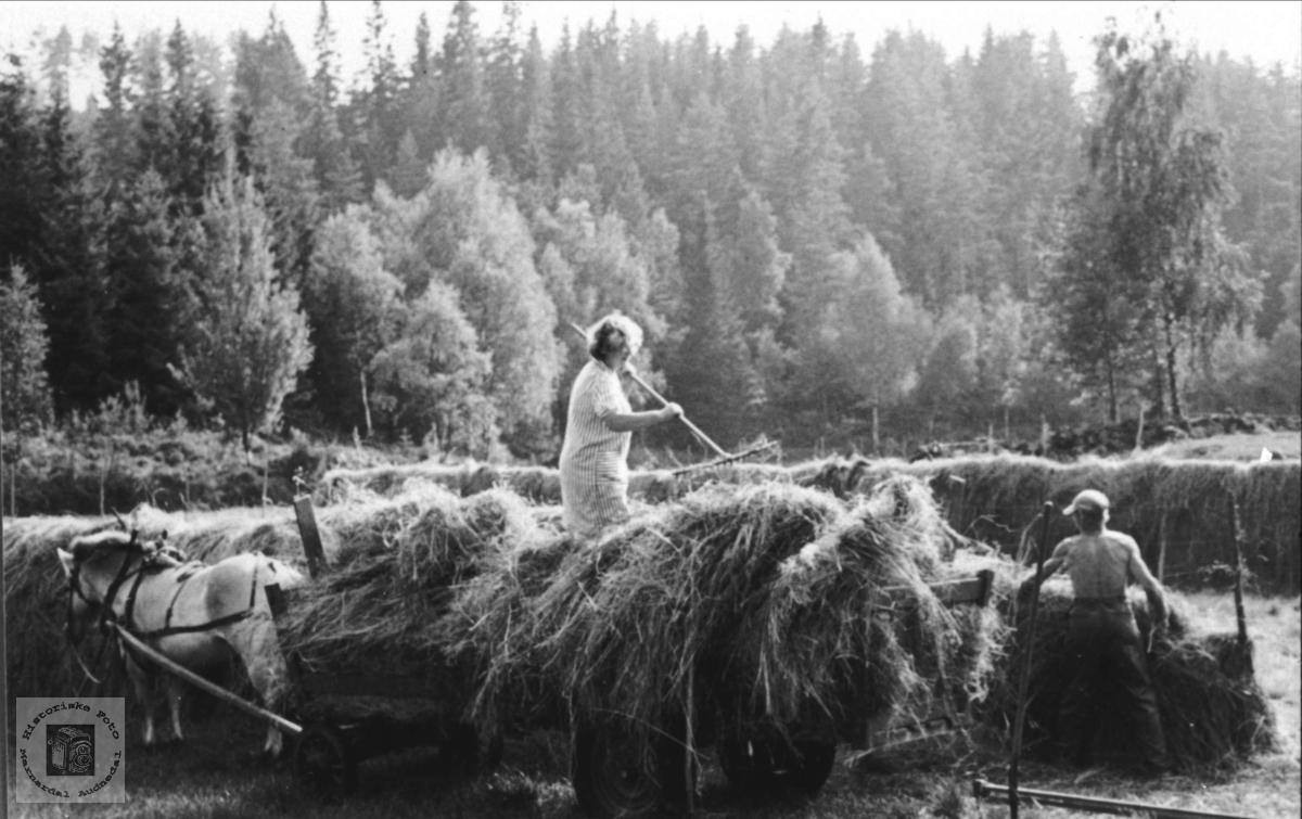 Høykjøring fra hesje. Tjomsland Laudal.