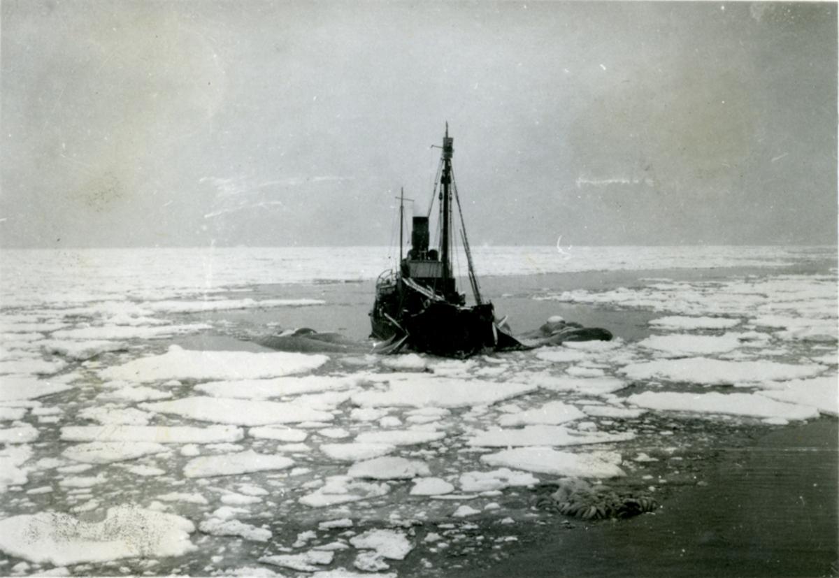 Selv i tider som disse! 5eren med 5 blå. i Fl/K ' Vestfold' (b. 1931, Furness Shipbuilding Co. Ltd, Haverton Hill).