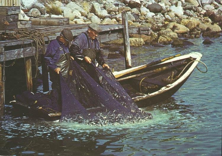 """""""Bohuslän: Fiske med landvad""""."""